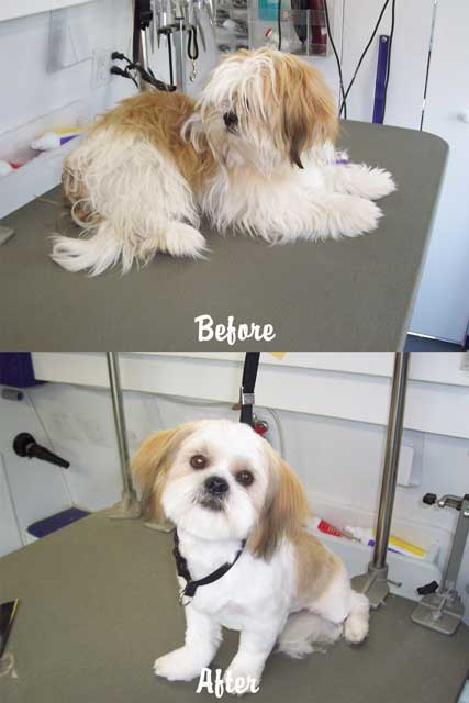 Mobile Pet Grooming - Before & After Photo