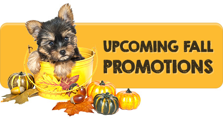 Events - Pet Grooming