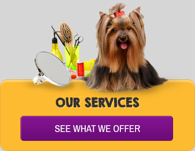 Our Pet Grooming Services